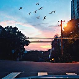 sunsetsky downtown nightlife freetoedit