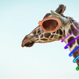giraffe freetoedit glass glasses sunglasses