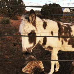 animals animalfriends donkey dogs airedaleterrier