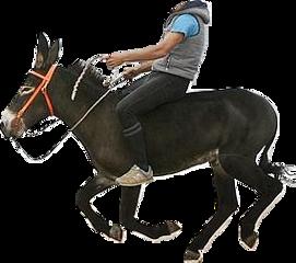 burro lusi freetoedit