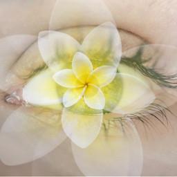 srcselfieflower selfieflower freetoedit flower eye