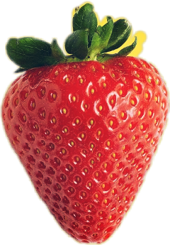 freetoedit stawberry stawberries berry scstrawberry