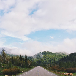 freetoedit nature road roadtrip forest