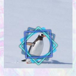 freetoedit neige pinguin