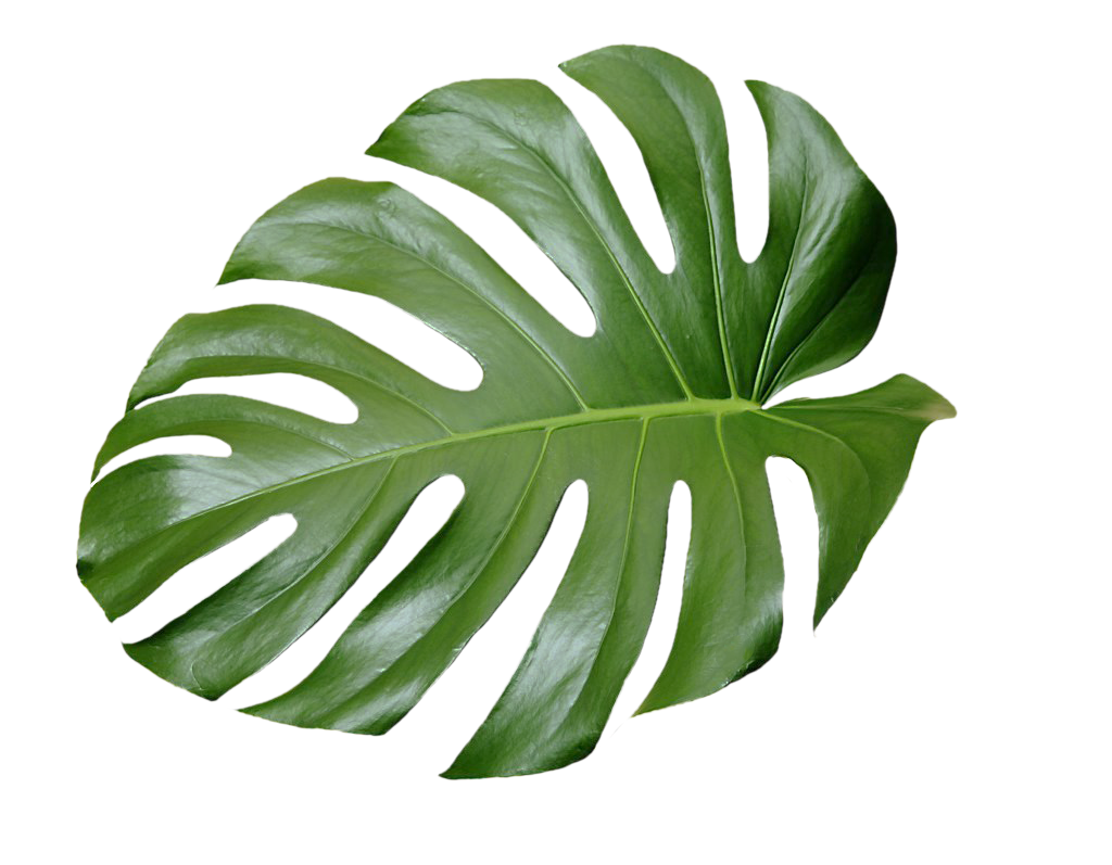 Aesthetic Leaf Sticker By 𝘔𝘺 𝘰𝘸𝘯 𝘦𝘥𝘪𝘵𝘴