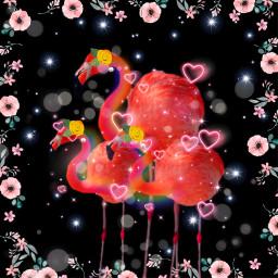 freetoeditv flamingo freetoedit