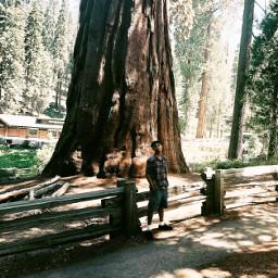 freetoedit largetree treeoflifechallenge forest mikeeoguru
