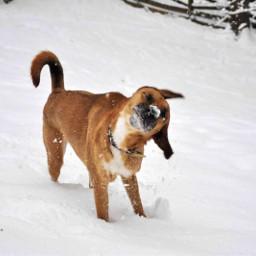 dog snow cute pcfunwithmydog funwithmydog pcpetsofpicsart