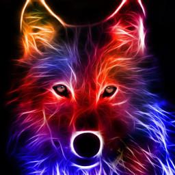 freetoedit remixit colorful wolf neon