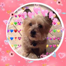 remixedbyme dog picco