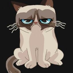 dcgrumpycat grumpycat
