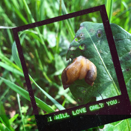 freetoedit snails love grass