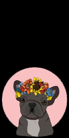 bulldog tumblr freetoedit