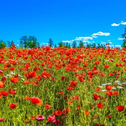 freetoedit nature landscape flowers landscapephotography pccolorfulsummer pcmyfavshot worldphotographyday