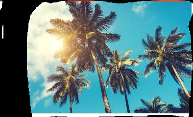 freetoedit scpalmtrees palmtrees