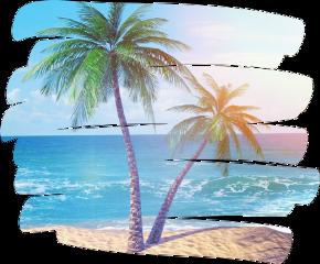 scpalmtrees palmtrees freetoedit