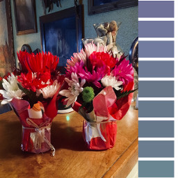 ecpaletteshow paletteshow photography freetoedit flowers