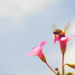 freetoedit bee nature photography sky pcmyfavshot worldphotographyday
