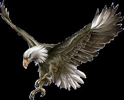 eagle birds animals pothography picsart stickersfreetoedit freetoedit