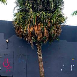 pcpalmtrees palmtrees freetoedit palm palmtree