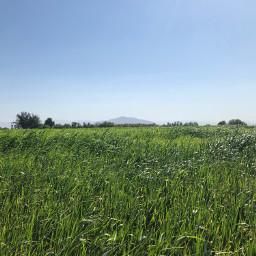 raw nature grassfield