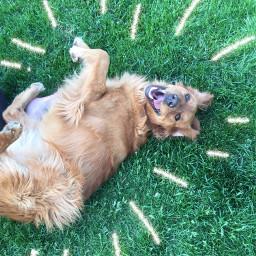freetoedit dogo adorable dogsofpicsart