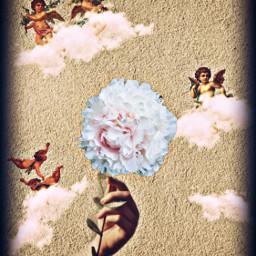freetoedit carnation cherubs hand flower