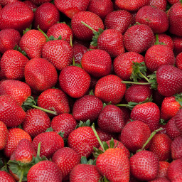 strawberry red summer background freetoedit