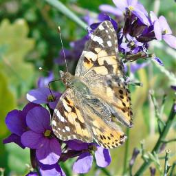 nature naturephotography backyard backyardphotography backyardview
