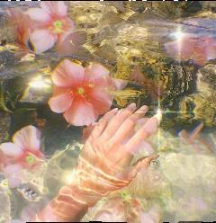 asthetic water glow flowers waterlilies freetoedit
