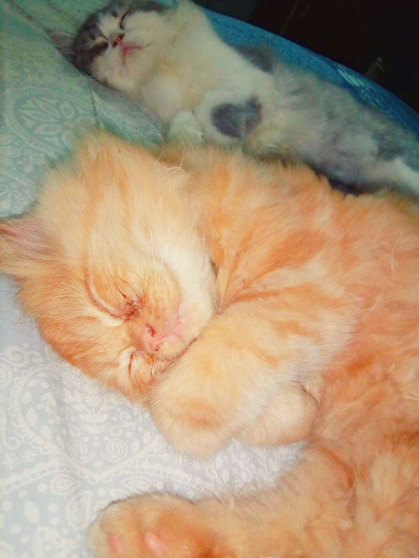 #cats  #cutecat  #animal
