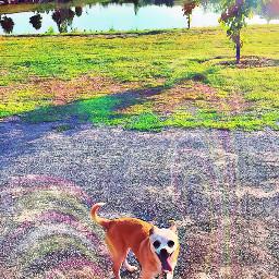 happydog tongueout funny