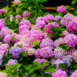 freetoedit flowers flowerphotography naturephotography landscapephotography pccolorfulsummer