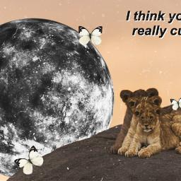 freetoedit kinglion lion king voteforme irckingofthejungle