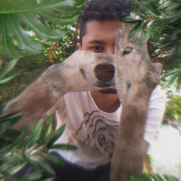 boatarde goodafternoon freetoedit savana wolf
