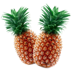 scpineapples pineapples fruit tropical freetoedit