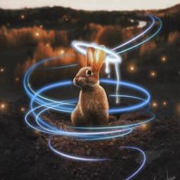 freetoedit spiraledit bunnies