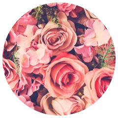 roses flowers pinkaesthetic pink aesthetic freetoedit