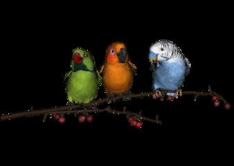 ftestickers cute birds parrot bird freetoedit