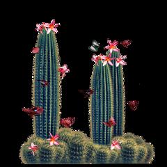 cactus succulent butterflies