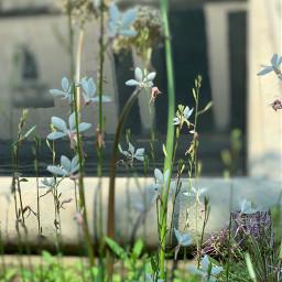 walkingaround flowers reflection delicate soft