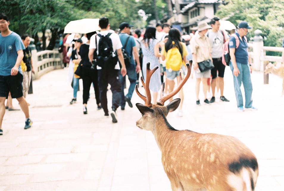 Nara :) #filmphotography