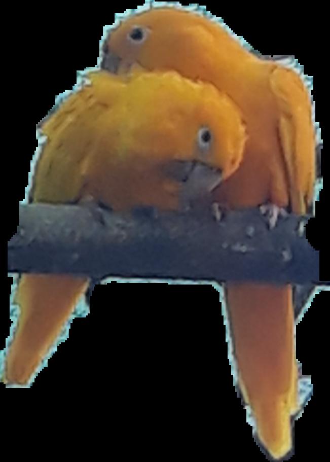 #birds #bird #passaro #ave #papagaio