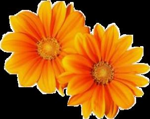 aesthetic aesthetictumblr aestheticsticker aestheticorange aestheticflowers freetoedit