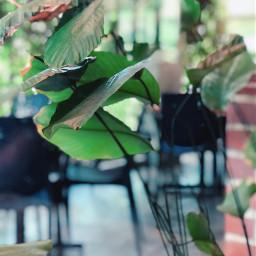 leaflove blureffect green plants