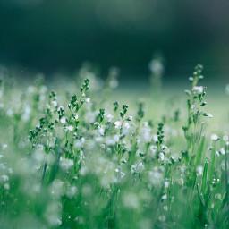 grass nature background backgrounds freetoedit