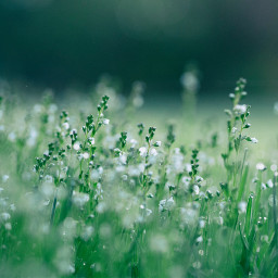 grass nature background backgrounds freetoedit