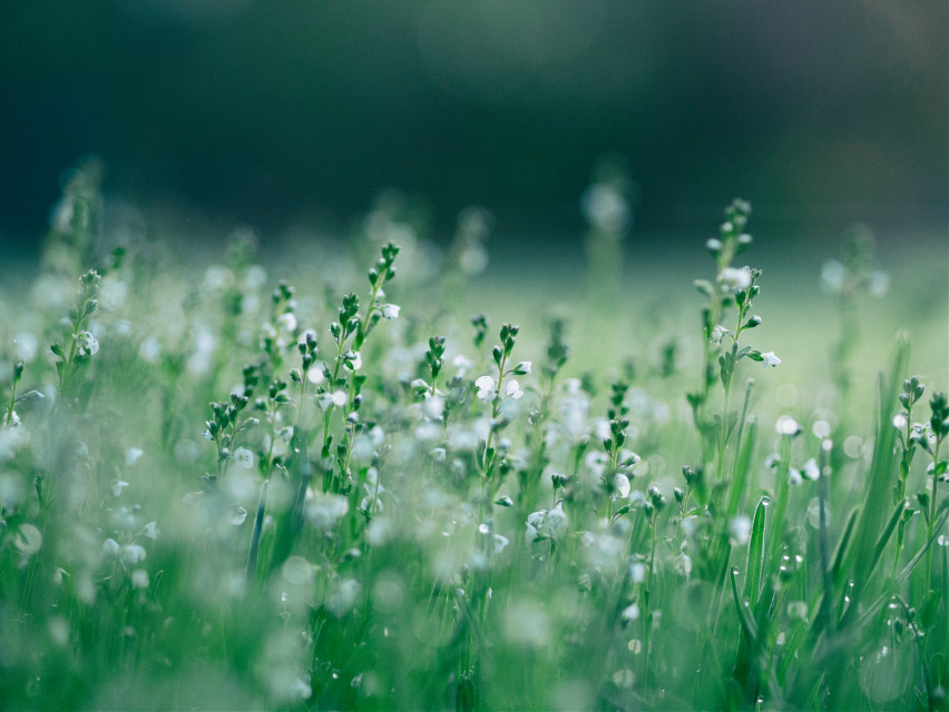 One with nature. Unsplash (Public Domain) #grass #nature #background #backgrounds #freetoedit