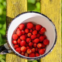 freetoedit wildberries berries nature red