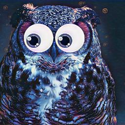freetoedit owl googlyeyes midnightclub